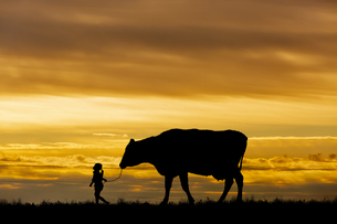 夕陽を背景に草原の牧場で牛を曳く女の子のシルエットの写真素材 [FYI04685093]