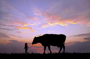朝陽を背景に草原の牧場で牛を曳く女の子のシルエットの写真素材 [FYI04685094]