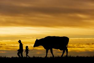 夕陽を背景に草原の牧場で牛を曳く老人と女の子のシルエットの写真素材 [FYI04685098]