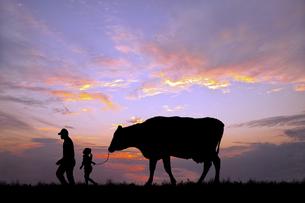 朝陽を背景に草原の牧場で牛を曳く老人と女の子のシルエットの写真素材 [FYI04685101]