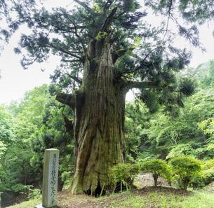山梨県笹子峠 矢立の杉の写真素材 [FYI04685146]
