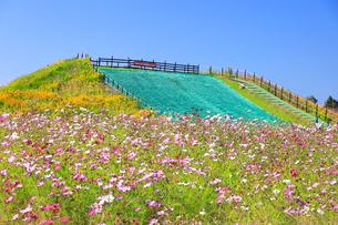 ソレイユの丘(長井海の手公園)の写真素材 [FYI04685250]