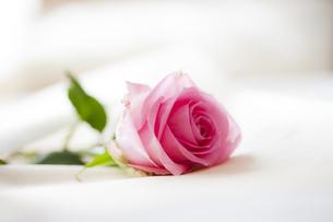 ベッドに置かれたバラの花の写真素材 [FYI04685467]