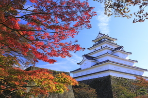 会津若松城と紅葉の写真素材 [FYI04685695]