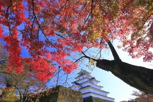会津若松城と紅葉の写真素材 [FYI04685698]