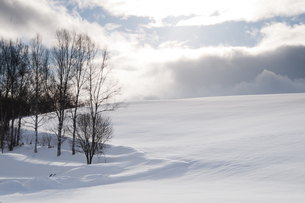 雪の丘と冬木立の写真素材 [FYI04685742]
