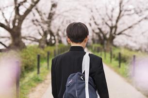 中学生 春の写真素材 [FYI04686546]