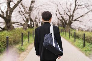 中学生 春の写真素材 [FYI04686547]