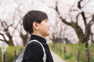 中学生 春の写真素材 [FYI04686558]