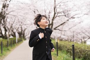 中学生 春の写真素材 [FYI04686561]