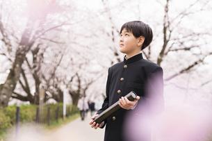 中学生 春の写真素材 [FYI04686573]