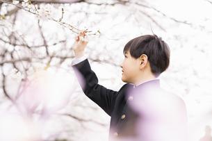 中学生 春の写真素材 [FYI04686582]