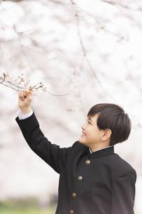 中学生 春の写真素材 [FYI04686585]