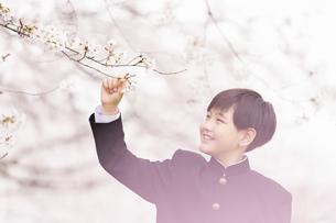 中学生 春の写真素材 [FYI04686586]