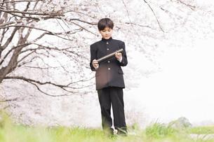 中学生 春の写真素材 [FYI04686592]