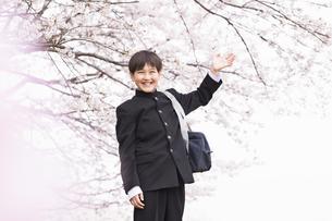 中学生 春の写真素材 [FYI04686605]
