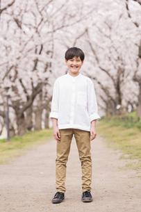 男の子 春の写真素材 [FYI04686623]