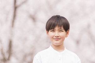 男の子 春の写真素材 [FYI04686628]