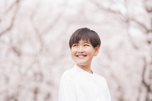 男の子 春の写真素材 [FYI04686631]
