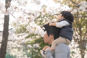 桜と親子の写真素材 [FYI04689617]
