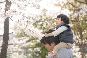 桜と親子の写真素材 [FYI04689619]