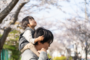桜と親子の写真素材 [FYI04689621]