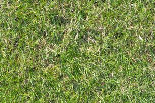 芝生の写真素材 [FYI04691437]