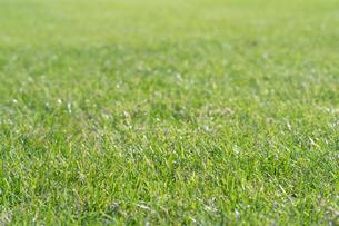 芝生の写真素材 [FYI04691438]