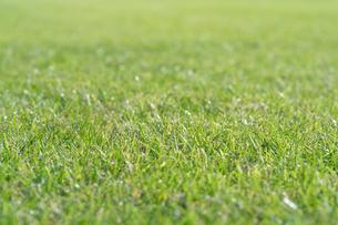 芝生の写真素材 [FYI04691443]