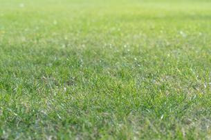 芝生の写真素材 [FYI04691445]