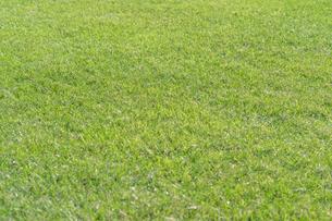 芝生の写真素材 [FYI04691446]