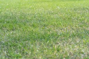 芝生の写真素材 [FYI04691447]