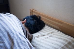 布団で寝る男性の写真素材 [FYI04696627]