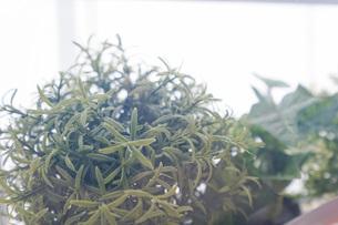 室内観葉植物イメージの写真素材 [FYI04703457]