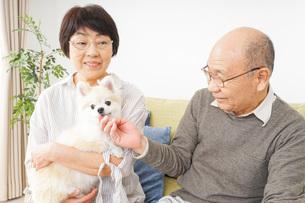 犬を飼うシニア夫婦の写真素材 [FYI04704459]