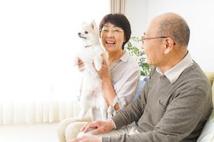 犬を飼うシニア夫婦の写真素材 [FYI04704461]