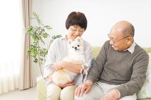 犬を飼うシニア夫婦の写真素材 [FYI04704464]