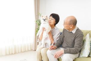 犬を飼うシニア夫婦の写真素材 [FYI04704465]