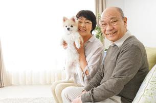 犬を飼うシニア夫婦の写真素材 [FYI04704467]