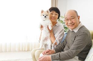 犬を飼うシニア夫婦の写真素材 [FYI04704468]