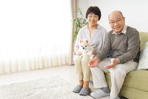 犬を飼うシニア夫婦の写真素材 [FYI04704475]