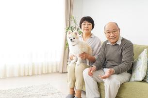 犬を飼うシニア夫婦の写真素材 [FYI04704477]