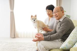 犬を飼うシニア夫婦の写真素材 [FYI04704478]