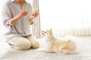犬を飼うシニア女性の写真素材 [FYI04704542]