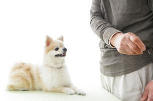 可愛い室内犬の写真素材 [FYI04704573]