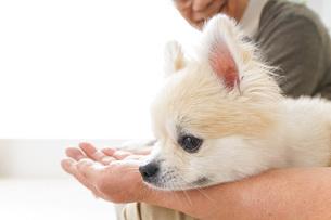 犬を飼うシニア夫婦の写真素材 [FYI04704698]