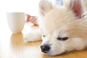 犬を飼うシニア夫婦の写真素材 [FYI04704872]