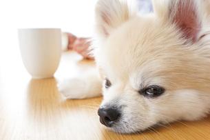 犬を飼うシニア夫婦の写真素材 [FYI04704888]