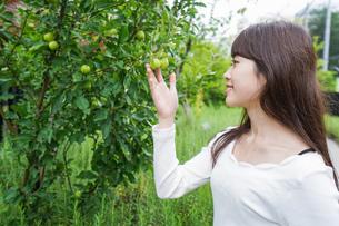 果物狩り・収穫の写真素材 [FYI04707329]