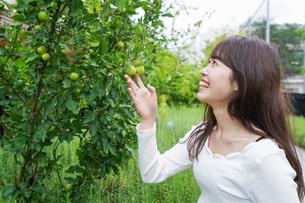 果物狩り・収穫の写真素材 [FYI04707332]